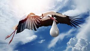 Storck bringing baby